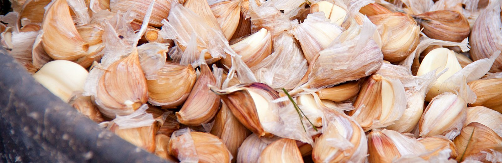 Garlic Closeup